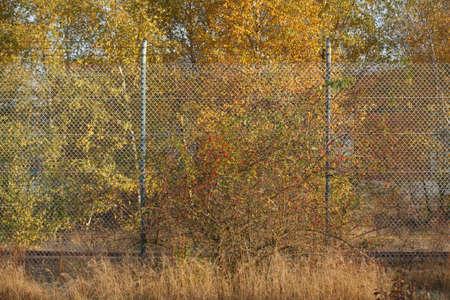 가시 단풍 철조망 울타리