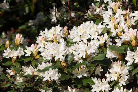 blte: White flower background.