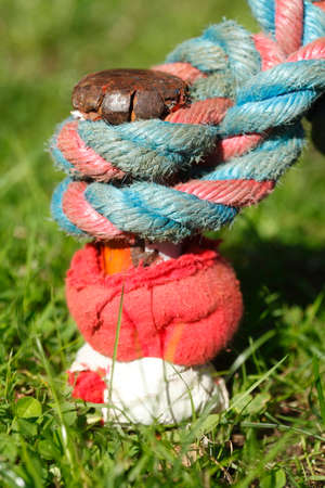 rope with knot connection, ground anchrage on a meadow