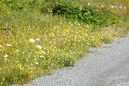 Grit way, footpath, pedestrians way