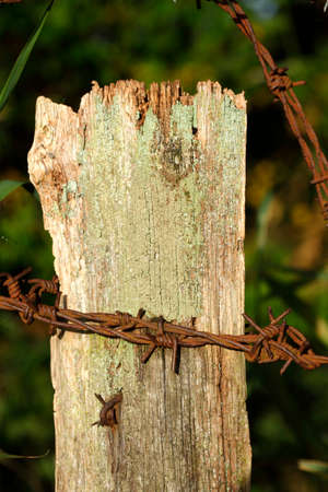 wire fence: Wooden Fence