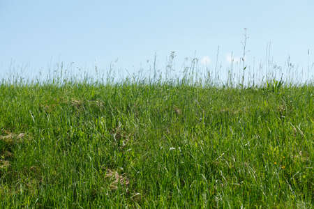 meadow, grass on a dyke with blue sky
