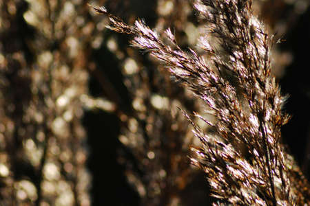 hobs: Grass in the wind