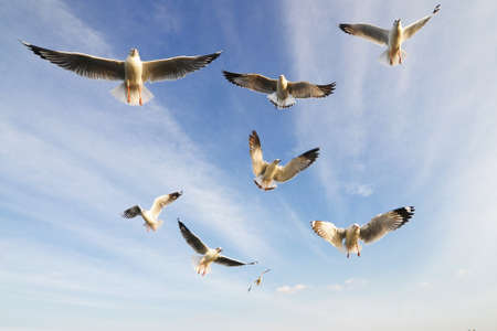 water birds: Flying birds in blue sky
