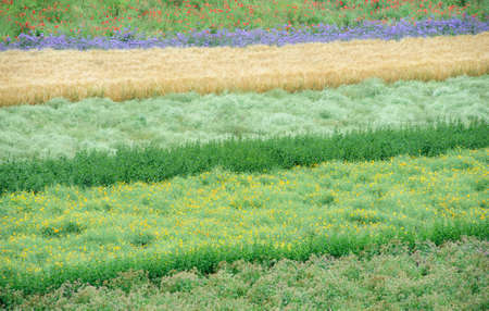 Flowers field, Tomita farm, Furano, Japan