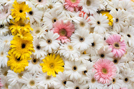 Various flowers background  Stock Photo