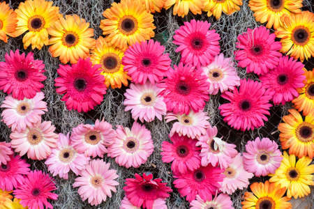 Pink yellow flowers background  photo