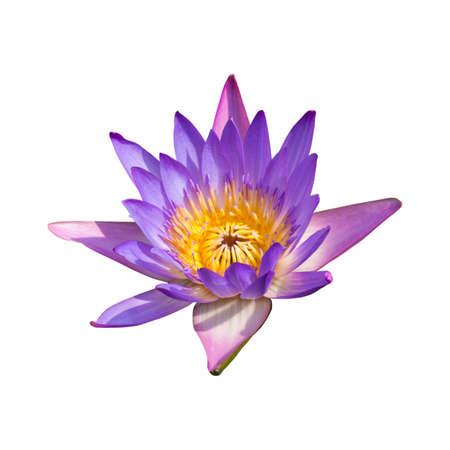 Lotus isolated on white background photo
