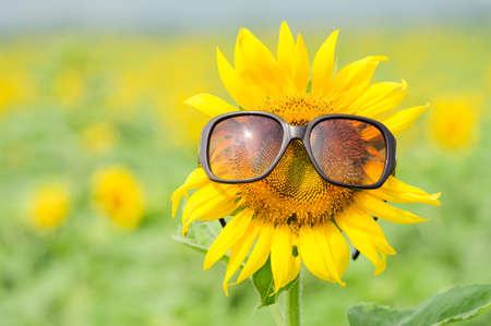 Zonnebloem draagt een zonnebril Stockfoto