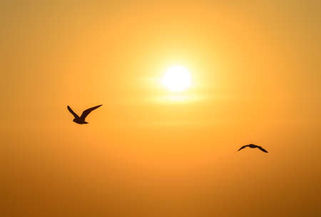 Seagull Flying Into the Sunset at Bangpu, Thailand photo