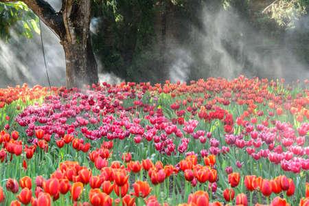 Jard�n de los tulipanes