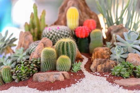 cactus flower: Various cactus plants Stock Photo