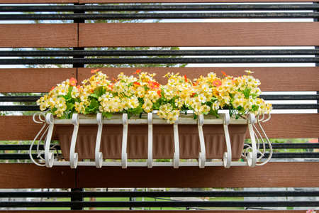 flower box: balcony flower box filled with plant-pots Stock Photo