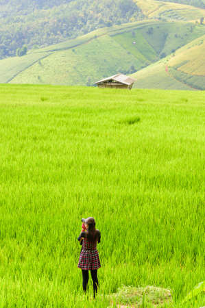 Green rice field terrece in Chiangmai, Thailand