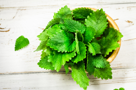 lemon balm: Melissa as high detailed close-up shot on a vintage white wooden table. selective focus. Stock Photo