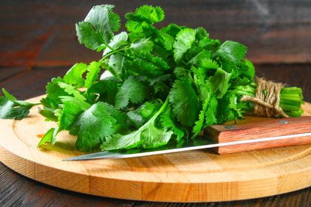 bunch of fresh cilantro on the boards, fresh herbs on wooden table Foto de archivo