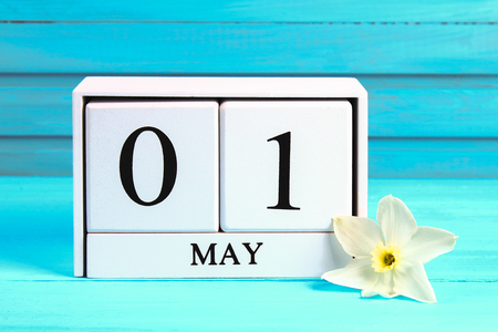 White wooden calendar with the text: May 1. White flowers of daffodils on a blue wooden table. Labor Day and Spring