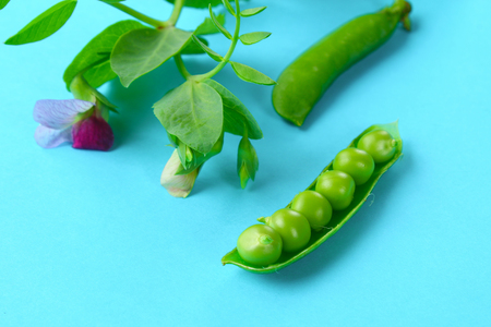 Peas, pods, leaves and pea flowers on a light pastel background. Floral layout Stock Photo