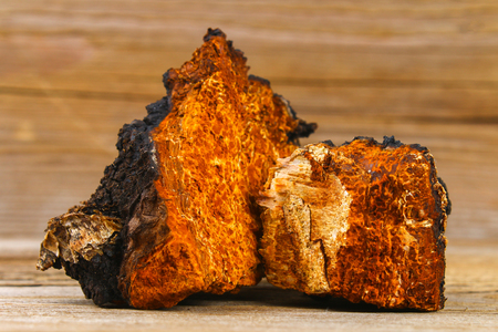 Healing tea from birch mushroom chaga is used in folk medicine