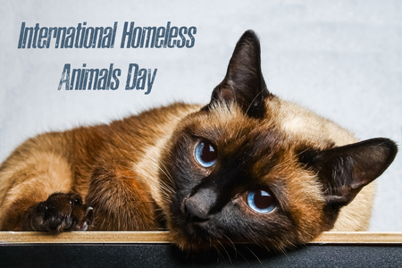 World day of stray animals. 18 August. International Homeless Animals Day