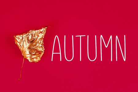 Autumn dry leaves painted with gold paint on a red background. Top view. Trendy. Golden autumn.