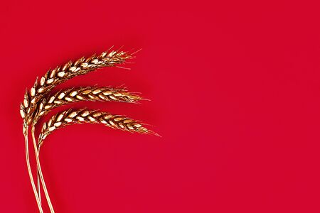 Ears of wheat painted with gold paint on a red background. Top twist. Copy space. Trendy. Golden wheat. Banco de Imagens