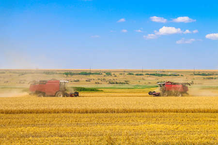 Harvester machine working in field. Combine harvester agriculture machine harvesting golden ripe wheat field. Agriculture.