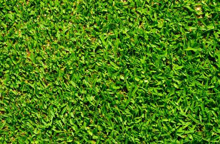 terrain foot: Belle texture d'herbe verte