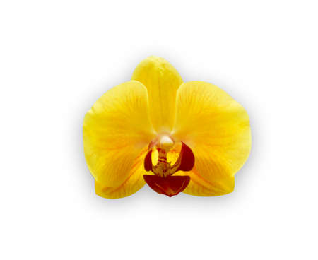 san valentin: Orchid isolated on white background.