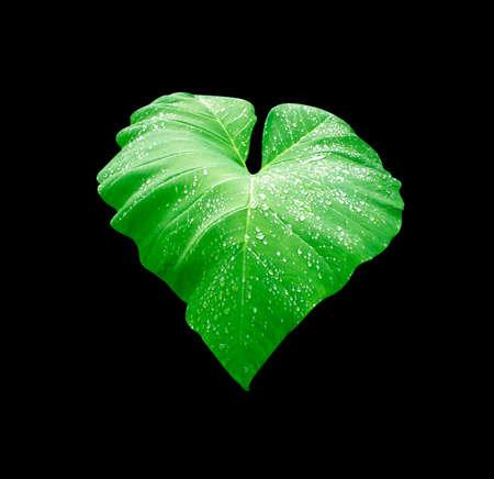 bionics: Drops of water on a lotus leaf