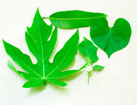 mango leaves: Papaya leaves, mango leaves, heart-shaped the leaves, leaves, eggplant isolated on white background.