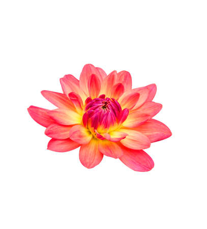 Flowers isolated on white background.