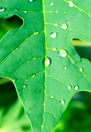 fresh water: Water droplets on leaves Stock Photo