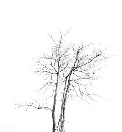 weeping willow tree: tree