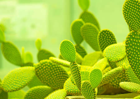 cactus green background