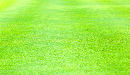 Green lawn grass background Stock Photo