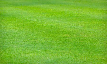 Green artificial grass texture background