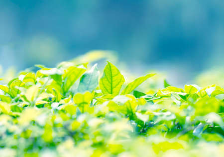 Beautiful natural background frame with fresh juicy green