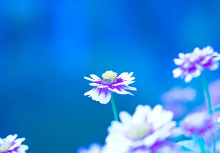 nature Blue Background Flower abstract