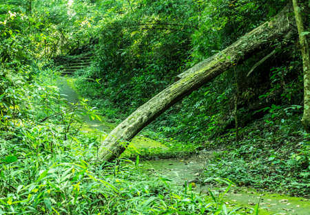 Logs and walkways in the green forest