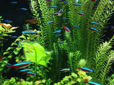 aqua: Neon fish