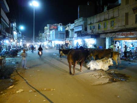 bikaner: Cows  Indian Ladies