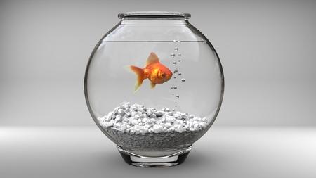fish bowl: Gold fish in a small fish bowl