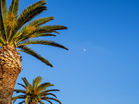 Blue sky, palm trees and small moon shining in the sky Stock fotó
