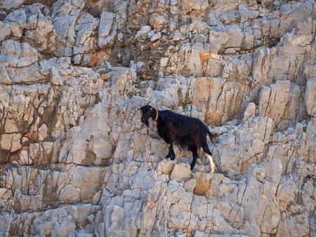 Small black goat scaling the rock cliffs Reklamní fotografie
