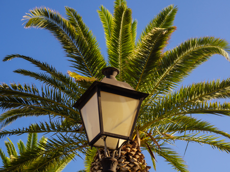 Street lamp and big palm tree - clear sky background