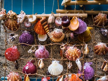 Colorful various sea shells on display - homemade decoration