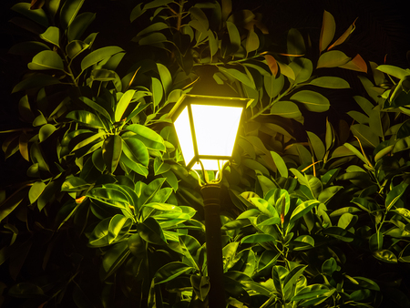 Street lantern - lamp - surrounded with ficus leaves Stock Photo