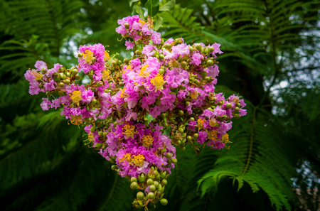 Beautiful pretty bloom of pink and yellow flowers Reklamní fotografie