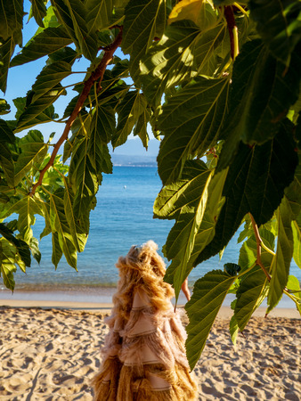 Fig tree green leaves - sandy beach and calm sea in the background - tropical environment